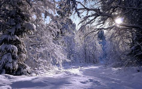 the winter winter magic grasscity forums