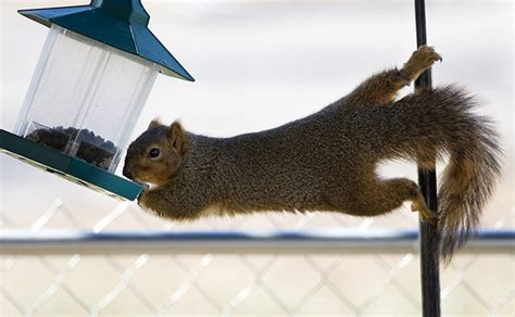 what to feed squirrels in backyard how to squirrel proof your yard