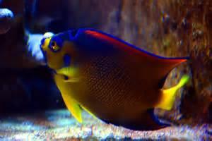 colorful fish colorful fish photo arvo poolar photos at pbase