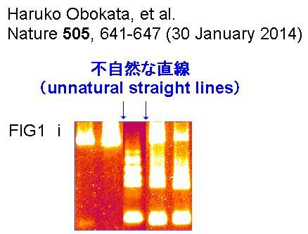 Dna Dna 1 3 End Haruko Kurumotani haruko obokata stap stem cells alleged image manipulation