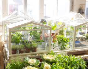 ikea socker indoor miniature greenhouse the green head