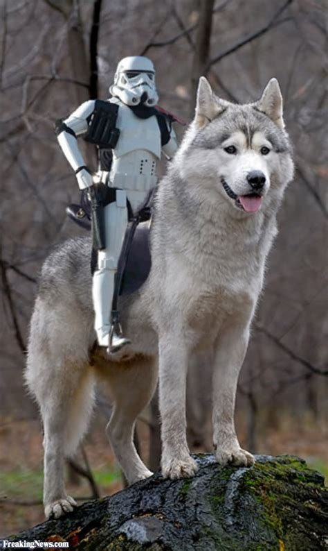 funny wolf images