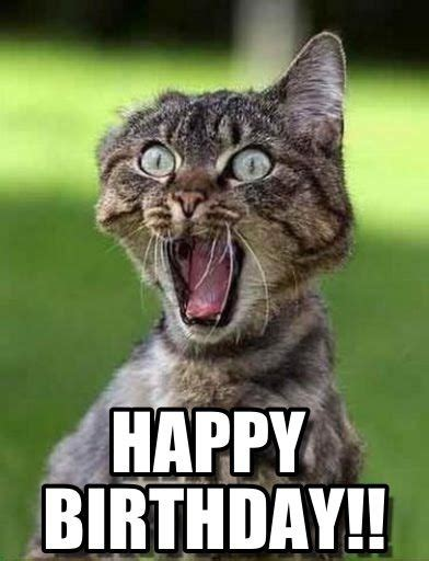 Cat Birthday Memes - happy birthday funny meme cat funny memes pinterest