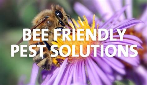 how to get rid of bees in backyard bee deterrent for patio 28 images how to get rid of