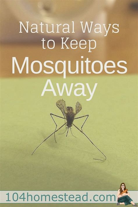 best thing to keep mosquitoes away 28 images 17 best