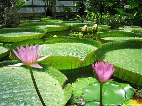 fiori di napoli orto botanico di napoli naples botanical garden it