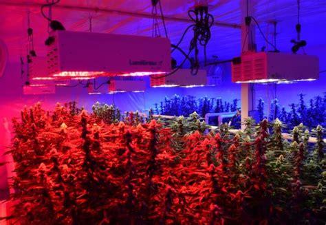 greenhouse led grow lights led grow light greenhouse plant applications eneltec