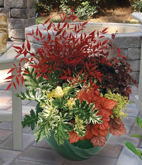 fall plants container gardening pinterest 17 best images about spring planting ideas on