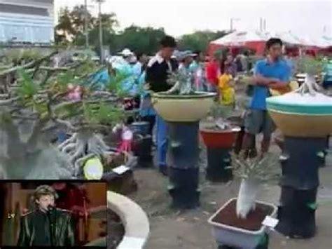 Pupuk Untuk Memperbanyak Bunga Cabe budidaya tanaman hias dengan pupuk organik cair call