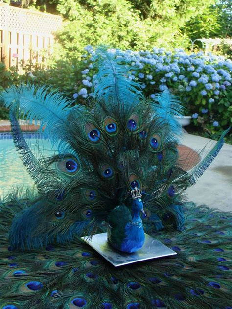 Peacock Home Decor Sale Peacock Wedding Decor For Sale Workshop Net