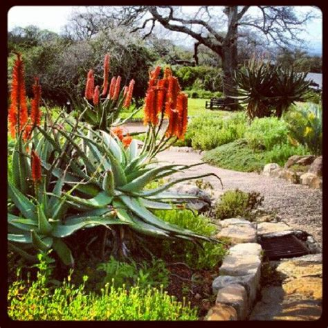 Kirstenbosch Botanical Gardens Indigenous Plants 26 Best Images About Indigenous Flowers And Garden Ideas On