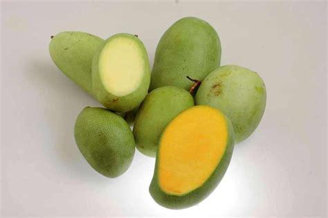 cara membuat manisan mangga harum manis 15 manfaat dan khasiat mangga manalagi untuk kesehatan