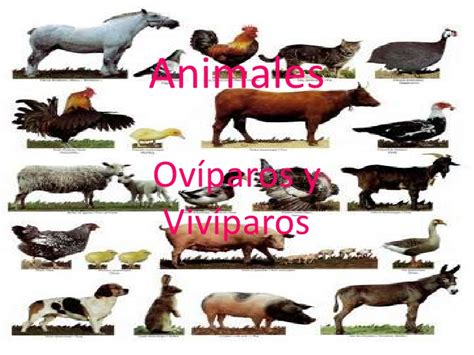imagenes de animales oviparos viviparos y ovoviviparos animales ov 237 paros y viv 237 paros