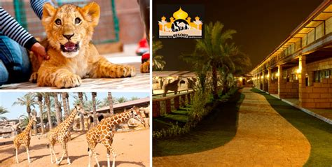 emirates zoo ticket offers stay zoo tickets emirates park resort