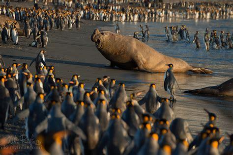 best wildlife photography 500px 187 the photographer community