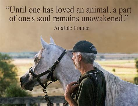 quotes about animals anatole quotes about animals quotesgram