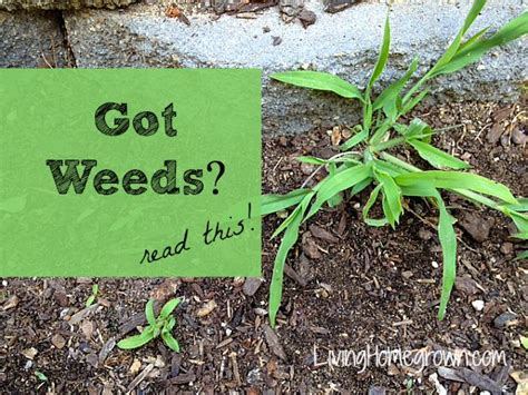 how to kill weeds in flower beds weed killer for flower beds thereu0027s no need for weed