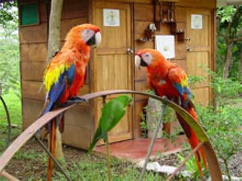 imagenes de lapas rojas guacamayas en caracas p 225 gina 4