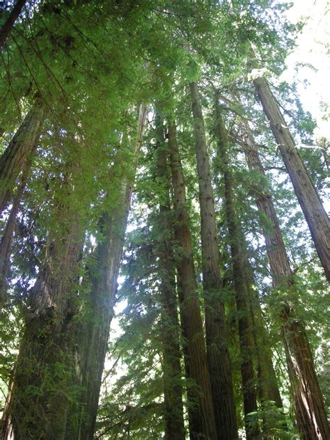list of trees list of growth forests