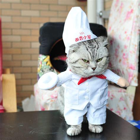 Baju Dress Hewan Kesayangan Pet Cat Lucu alfa img showing chef costume beds and costumes