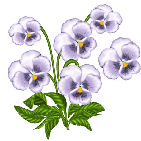 viola fiore disegno viola pensiero immagini