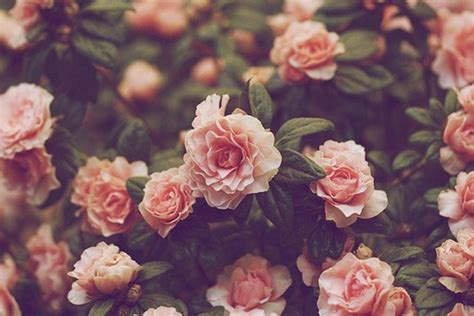 wallpaper tumblr flower vintage flower backgrounds wallpaper cave