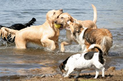 dogs at play the secret language of dogs