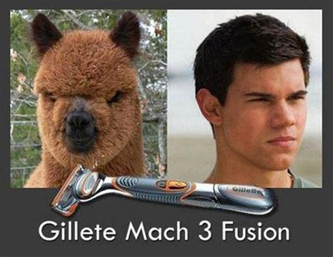 Taylor Lautner Meme - effects of shaving funny pictures quotes memes jokes