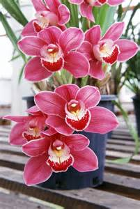 Flowering House Plants by Growing Orchids Fact Sheet Burke S Backyard