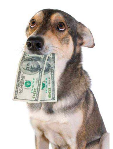 how far to walk a puppy how much to charge for walking