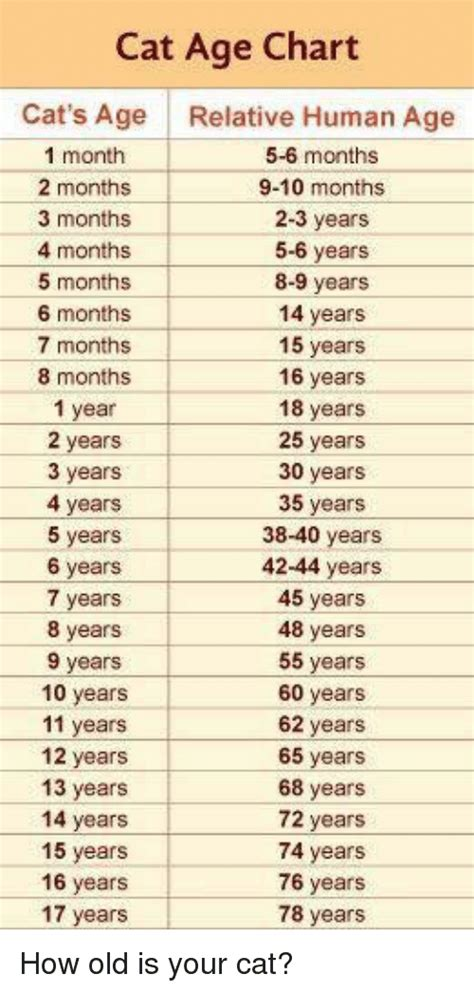 what is years to human years cat age chart cat s age relative human age 1 month 5 6 months 2 months 9 10 months 3
