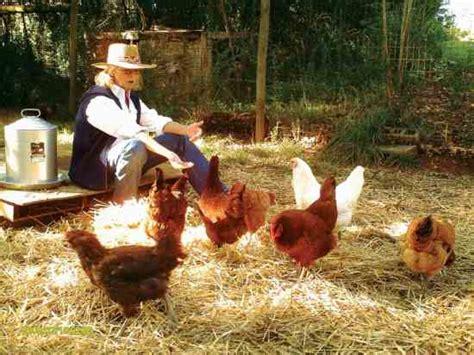 Chicken Manure Fertilizer For The Vegetable Garden Chicken Manure Vegetable Garden