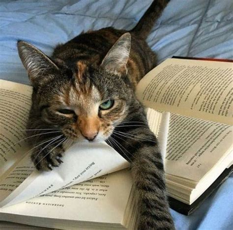 Cat And Books 141 best books cats images on