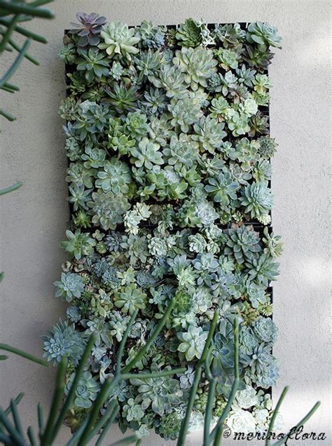 Succulent Wall Planter For Sale by Succulent Vertical Garden Mural By Merino Flora