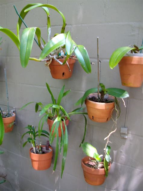 hanging flower pot hooks 17 best images about garden on a wall living walls on