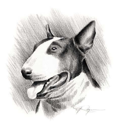 english bull terrier drawings