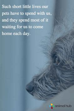 shih tzu separation anxiety 1000 images about shih tzu separation anxiety on separation anxiety