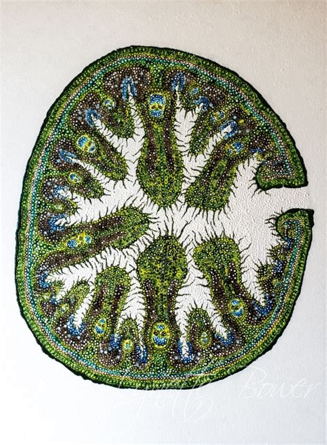 xerophytic leaf cross section artwork lynettebower