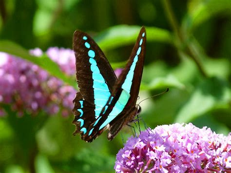 tcf spring butterfly  grief support parents bereaved grandparents mourning  loss