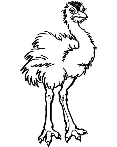 printable coloring pages free printable ostrich coloring pages for