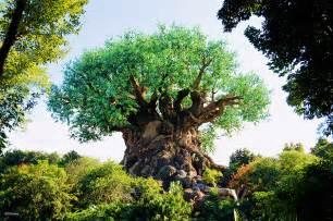 disney tree vintage walt disney world tree of 171 disney parks