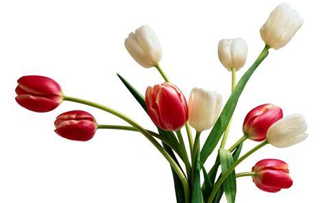 beautiful plants flowers for flower lovers beautiful flowers desktop