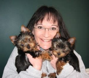 yorkies for sale in milwaukee terrier puppies for sale milwaukee wi 217526