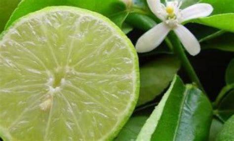 membuat infused water jeruk nipis tidak pahit manfaat jeruk nipis arsip informasi buat bunda