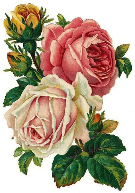 cluster of roses tattoo 17 best ideas about vintage roses on