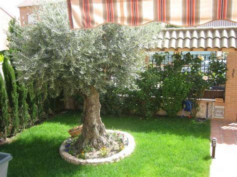 imagenes de jardines tematicos olivo en el jard 237 n pedrezuela