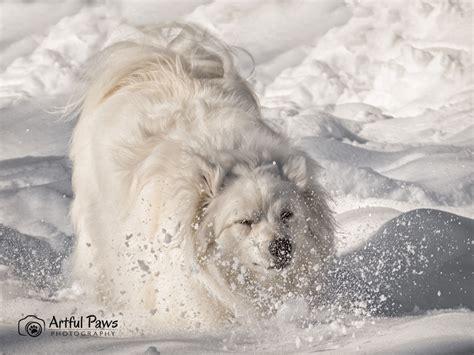 puppy rescue va the snow rescue pet of the week va photographer