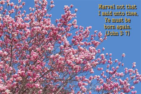 favorite bible versed flowers wallpaper hot discussions