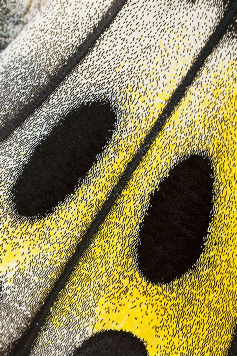macro pattern photography 17 best images about insects wing patterns on pinterest