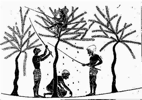 vasi antichi romani l ulivo nella storia le rappresentazioni nei vasi antichi